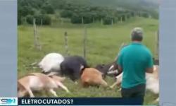 Vinte cabeças de gado morrem eletrocutadas em fazenda de Dores do Rio Preto
