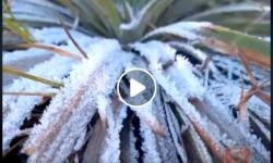 Baixa temperatura forma gelo no Parque Nacional do Caparaó