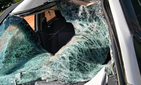 Animal na pista provoca acidente em Guaçuí