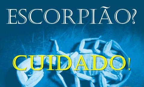 Secretaria de Saúde recebe denúncias de Escorpiões em diversos pontos da cidade