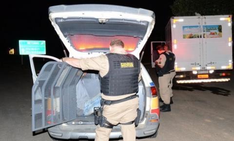 PM prende motorista com 11 cabeças de gados furtadas em zona rural