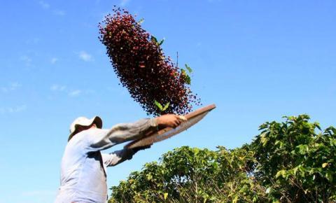 Café pode gerar até R$ 800 milhões para municípios do Caparaó Capixaba