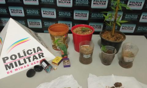 PM de Tombos prende 02 indivíduos que cultivavam pés de maconha em casa