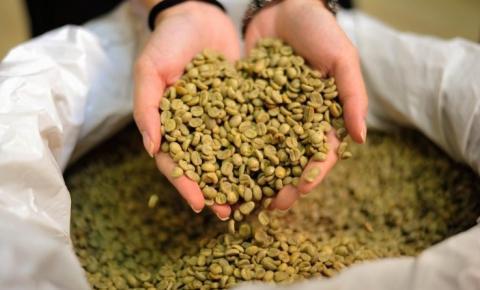 Queda do café arábica chega a 76 Reais/sc neste mês