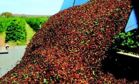 Minas Gerais deve alcançar produção recorde de café na safra 2020