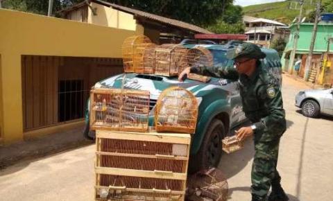 Polícia Ambiental do Caparaó apreende pássaros silvestres durante ação