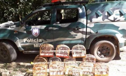 Polícia Ambiental do Caparaó apreende 12 pássaros em cativeiro