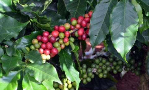 Novos preços mínimos para o café começam a valer até março de 2022