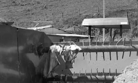 Homem morre ao cair em máquina trituradora em Dores do Rio Preto