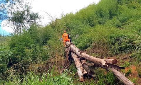 Árvore de eucalipto cai e mata trabalhador na zona rural de Manhuaçu