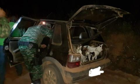 Polícia Militar de Meio Ambiente frustra caçada em Alto Caparaó