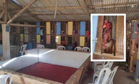 Rinha de galo é fechada pela PM em Dores do Rio Preto