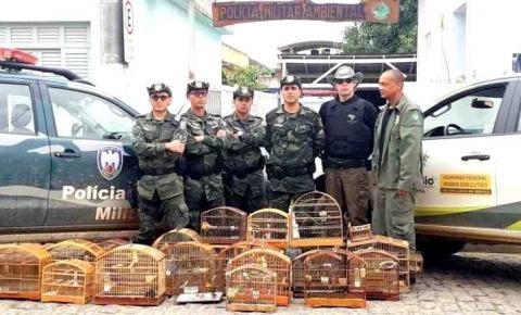 Operação recupera pássaros silvestres em situação de maus-tratos em Dores do Rio Preto