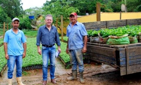 Programa da Prefeitura de Dores distribui mudas de café a produtores