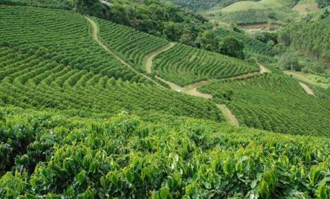 """Cafés: """"Montanhas do Espírito Santo"""" protocola registro no INPI"""