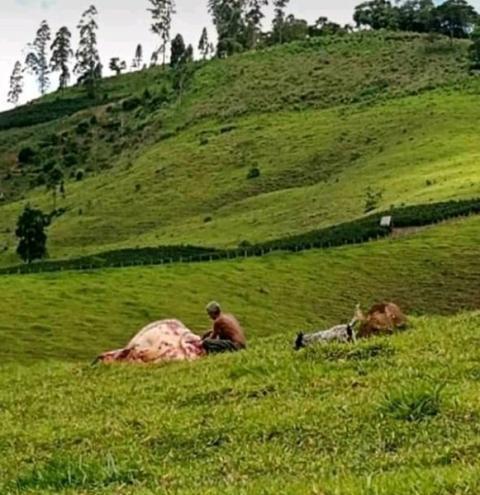 Homem que roubou gado em Carangola acaba morto pela PM