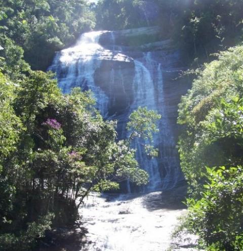 Meio Ambiente: Projeto de reflorestamento em Dores do Rio Preto
